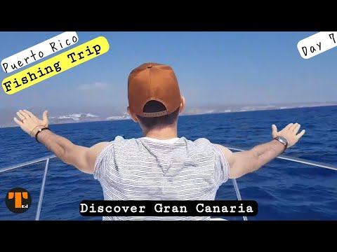 Bottlenose Dolphin in Gran Canaria - Dolphin & Whale