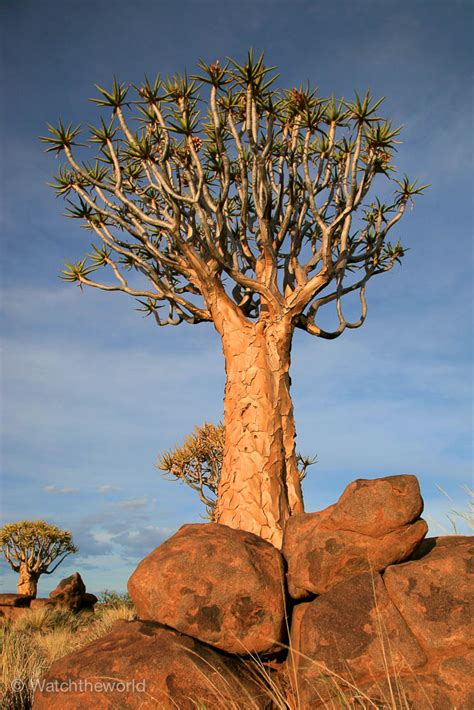 Photos of Quiver Tree Forest | Watchtheworld