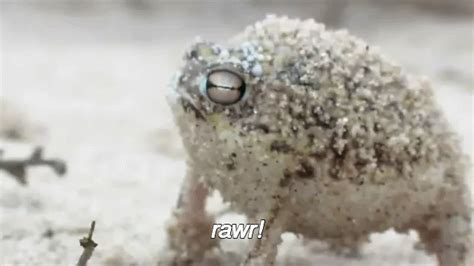 Tiny And Feirce GIF - Animals Frogs DessertRainFrog