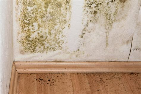Mold Remediation Cost | Eliminating Mold in Household