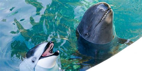 Vancouver Aquarium's Dolphin Just Lost Her Only Friend