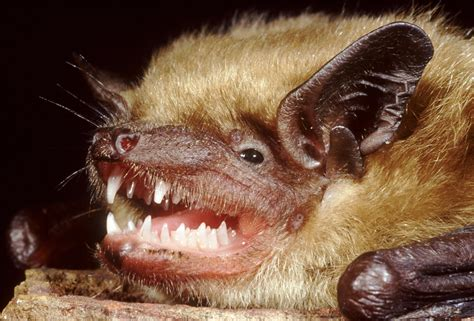 Bats Crash More Often When They Use Vision