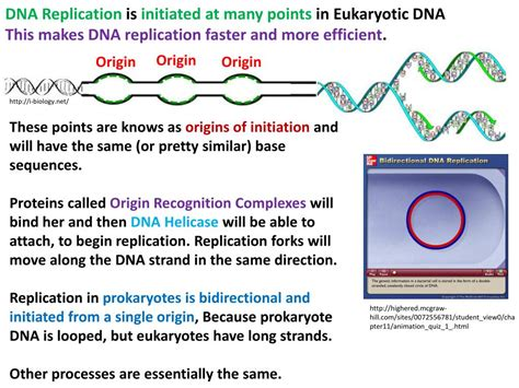 PPT - DNA Replication PowerPoint Presentation - ID:2205923