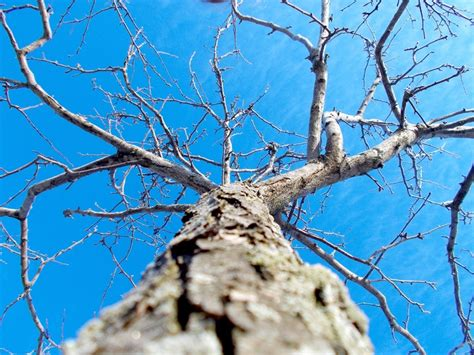 95 best Worm's Eye View: TREES images on Pinterest