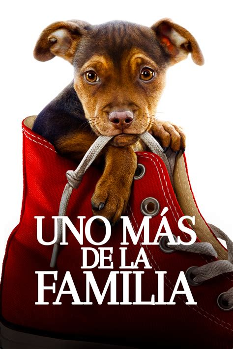 A Dog's Way Home - Movie info and showtimes in Trinidad