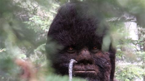 """PhD's """"Astounded"""" by Sasquatch videos and Proof of Bigfoot"""
