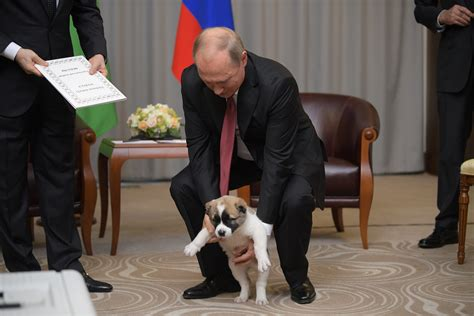 Putin's puppy: Russia's dog-loving leader gets a furry