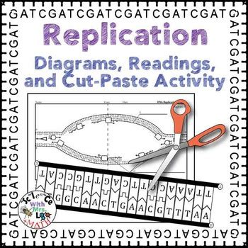 DNA Replication Activity, Diagram, and Reading for High