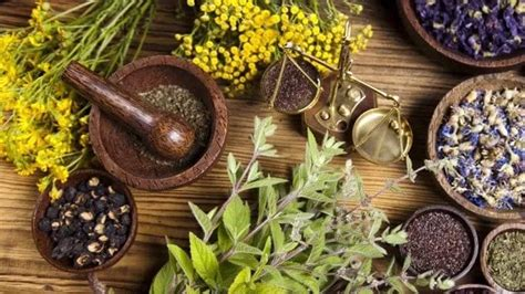 Traditional herbal medicine in Ghana - history and current